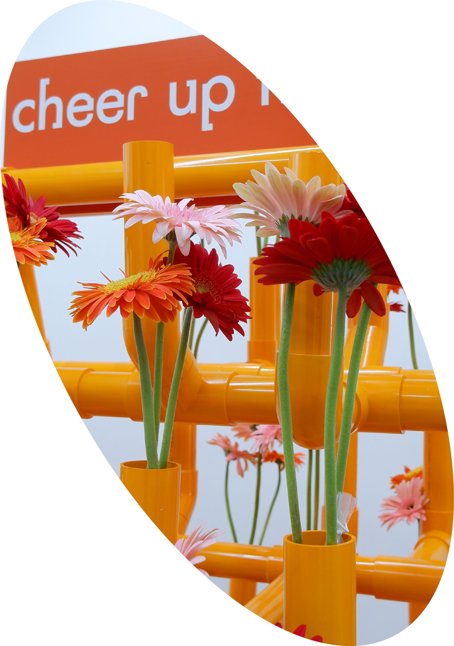 Cheer up Flowers